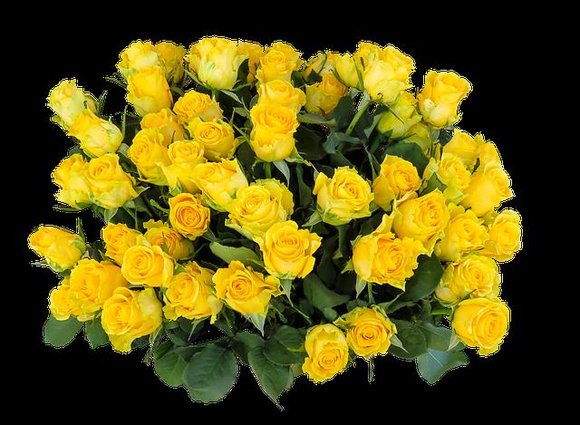 žluté růže