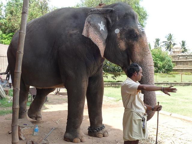 cvičitel slona