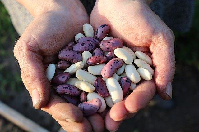 hrst fazolí