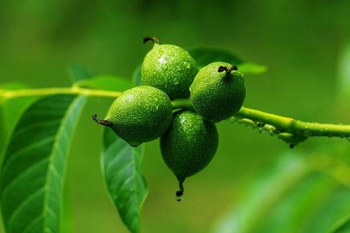 Ořechovka, nejoblíbenější domácí likér